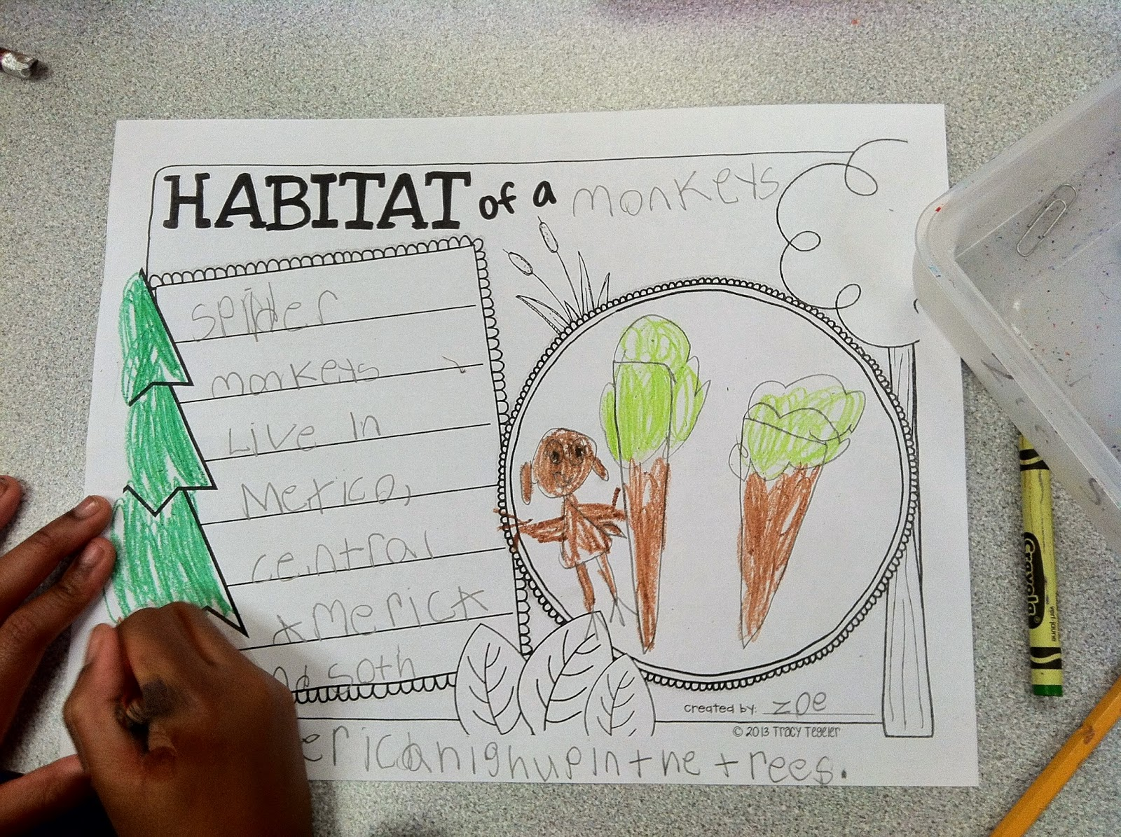 Sweet Kindergarten Animal Research Projects